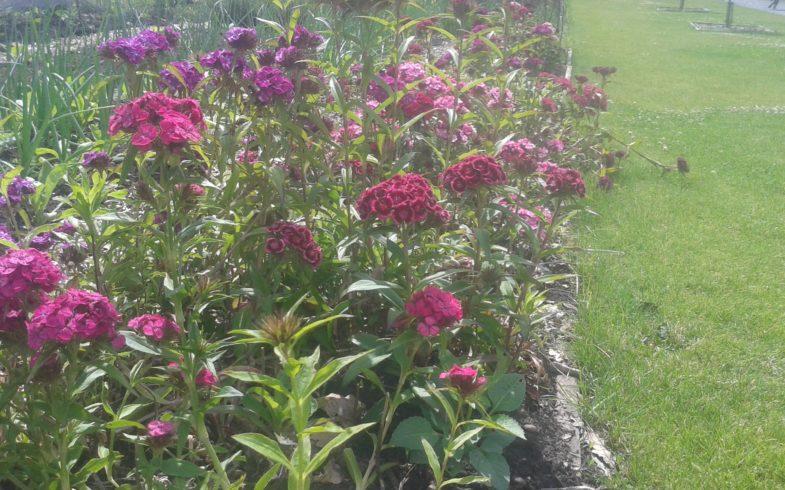Progress In Walled Garden