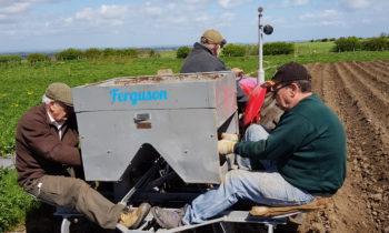 Planting Raindrop potatoes on 10th May 2018!